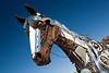 Horse-AZ-Fountain Hills-2007-10-07-0002
