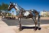 Horse-AZ-Fountain Hills-2007-10-07-0001