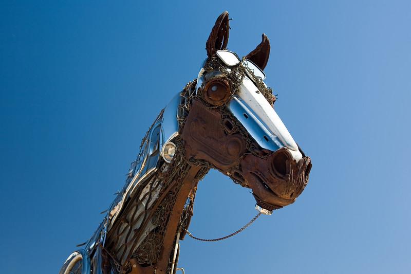 Horse-AZ-Fountain Hills-2007-10-07-0003