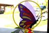 Butterfly-2005-08-27-0001