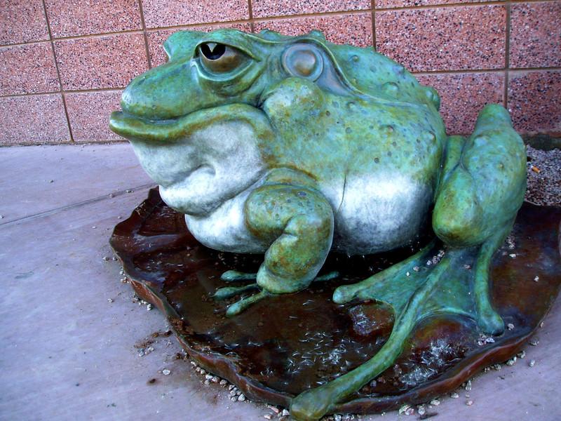 Frog-2004-11-25-0001