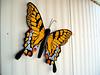Butterfly-2004-03-13-0002