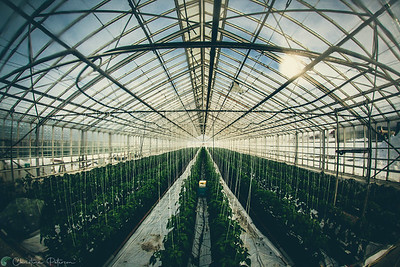 Organic Geothermal Greenhouse