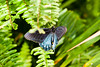Butterfly Wonderland - 2013-10-18-131