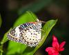Butterfly Wonderland - 2013-10-18-130
