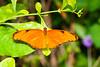 Butterfly Wonderland - 2013-10-18-135