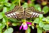 Butterfly Wonderland - 2013-10-18-129