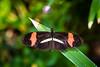 Butterfly - Postman