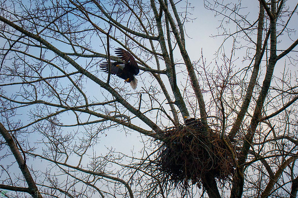 Urban Eagle's Nest