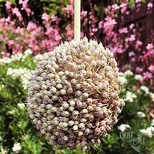 Upside Down Allium