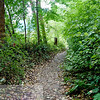 """Walk through the forest This Image is © Tricia Chatterton Goldrick/Chattergold Studios.  All Rights Reserved.  No duplication without permission (see commercial downloads).  This image may be purchased from this website for blogging purposes only under """"Personal Downloads"""" This Image is © Tricia Chatterton Goldrick/Chattergold Studios.  All Rights Reserved.  No duplication without permission (see commercial downloads).  This image may be purchased from this website for blogging purposes only under """"Personal Downloads"""" This Image is © Tricia Chatterton Goldrick/Chattergold Studios.  All Rights Reserved.  No duplication without permission (see commercial downloads).  This image may be purchased from this website for blogging purposes only under """"Personal Downloads"""""""