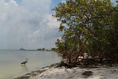 July 2012 Blue Heron. Tampa Florida Photography Trip. Skyway Bridge over Tampa Bay. Photography By Lloyd R. Kenney III (C) 2012. All Rights Reserved.