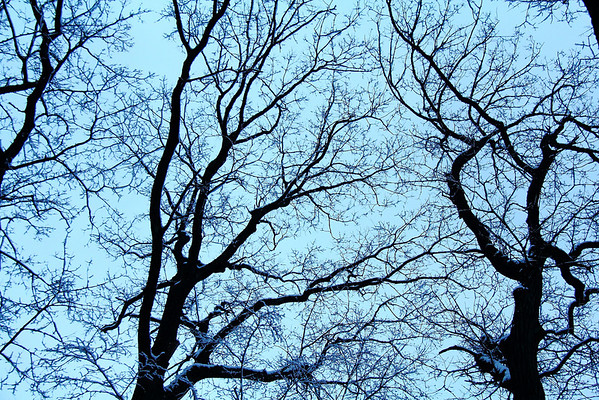 The Trees of Winter 2011