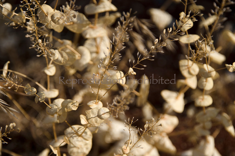 So Delicate Painted Hills National Monument, OR September 2012