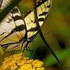 """Butterflyzilla"""