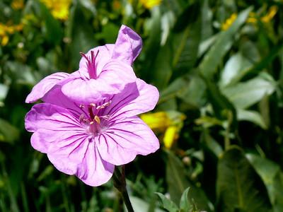 gc flower
