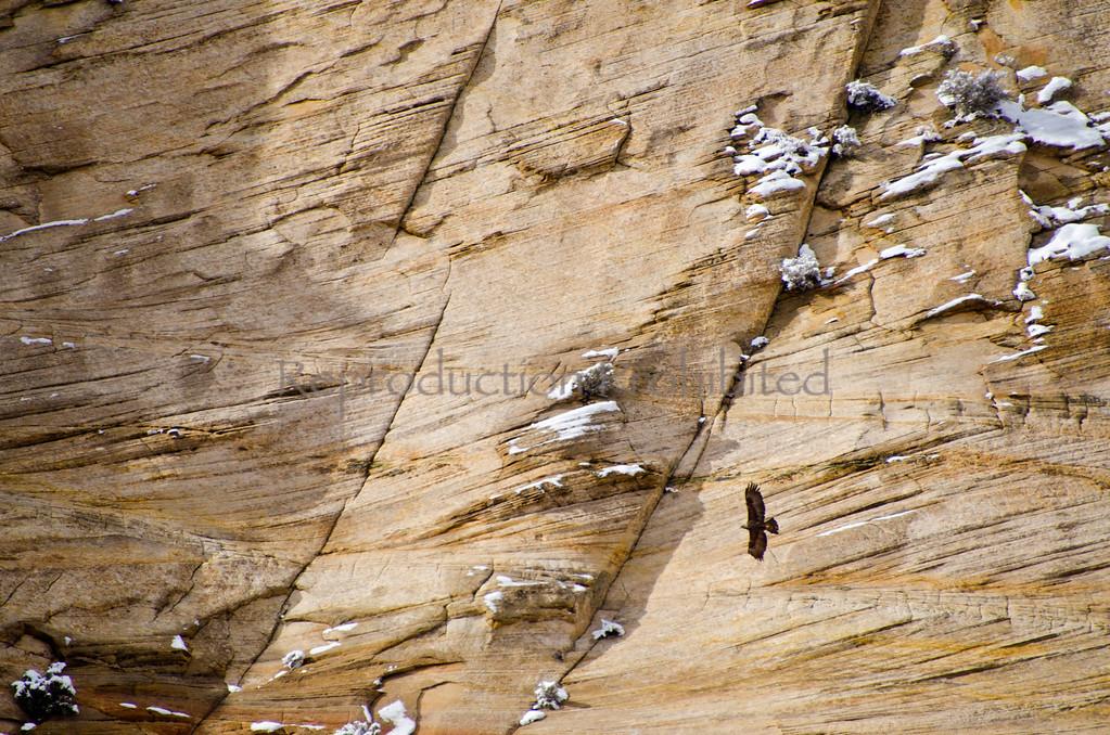 Eagle She Flys Zion National Park, Utah December 2012