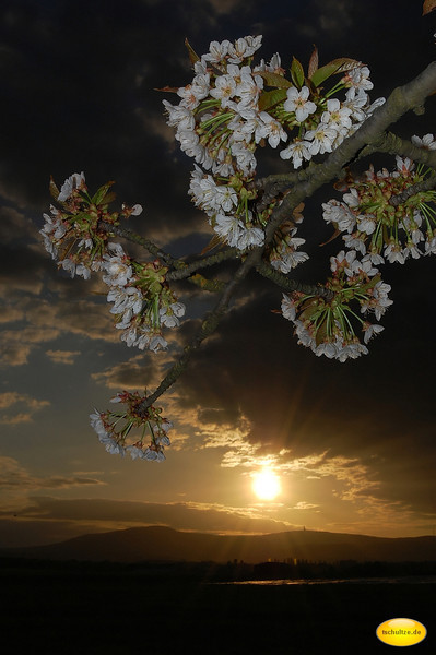 Fruit Tree and Sunset