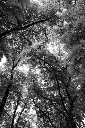 Des Branches d'Arbes 2