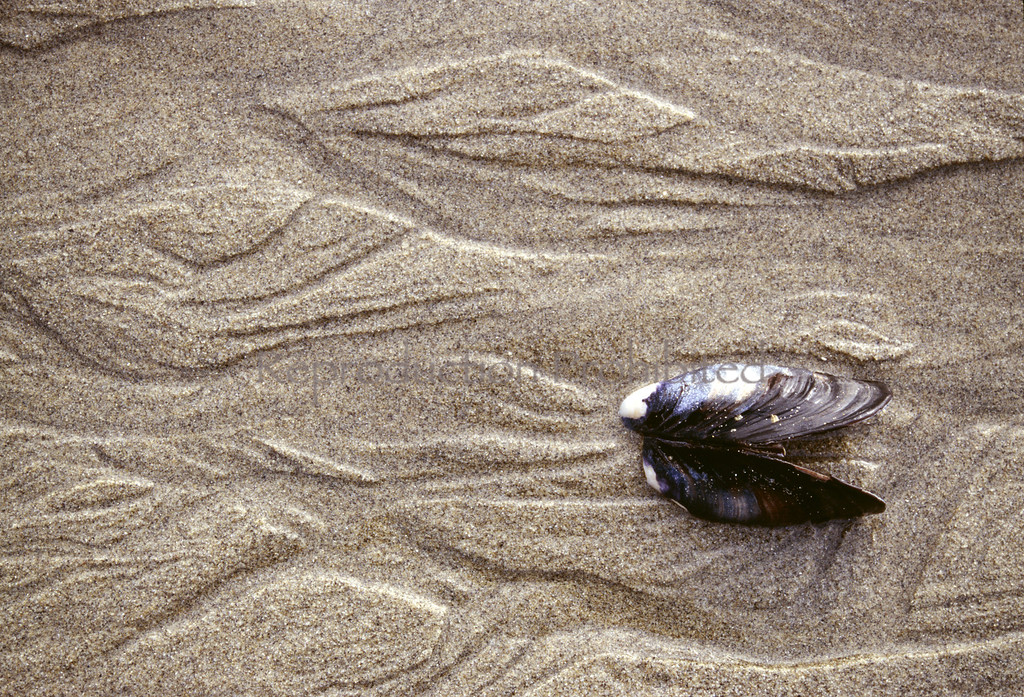 Mimic Ocean Beach San Francisco, CA