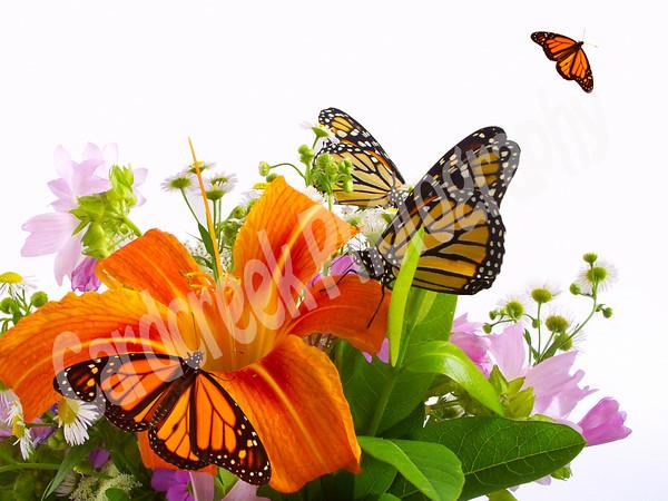 Monarchs on wildflowers.