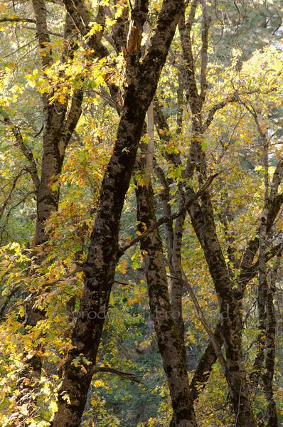 Subtle Dream Yosemite National Park, CA