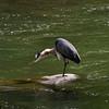 Blue heron stylist
