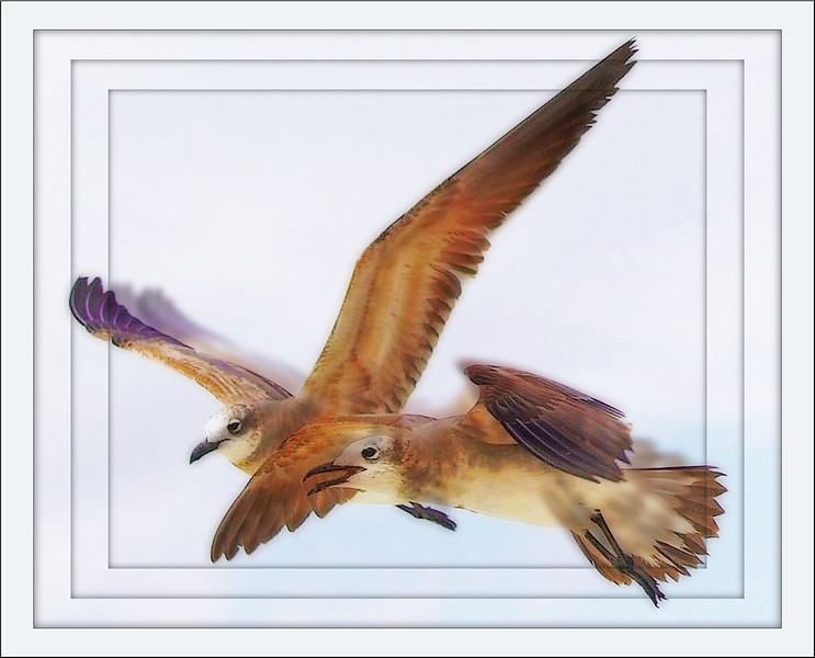 Seagulls of South Beach