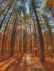 Autumn in Umstead
