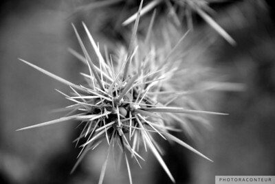 """Cactus Close-up No. 1"" ~ Close-up of cholla cactus found in Red Rock Canyon."