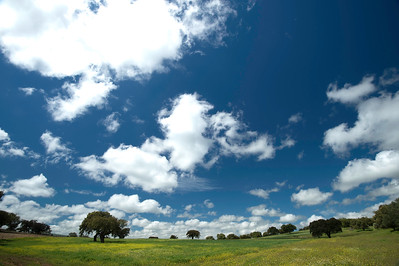 Trees and Clouds, Low Horizon