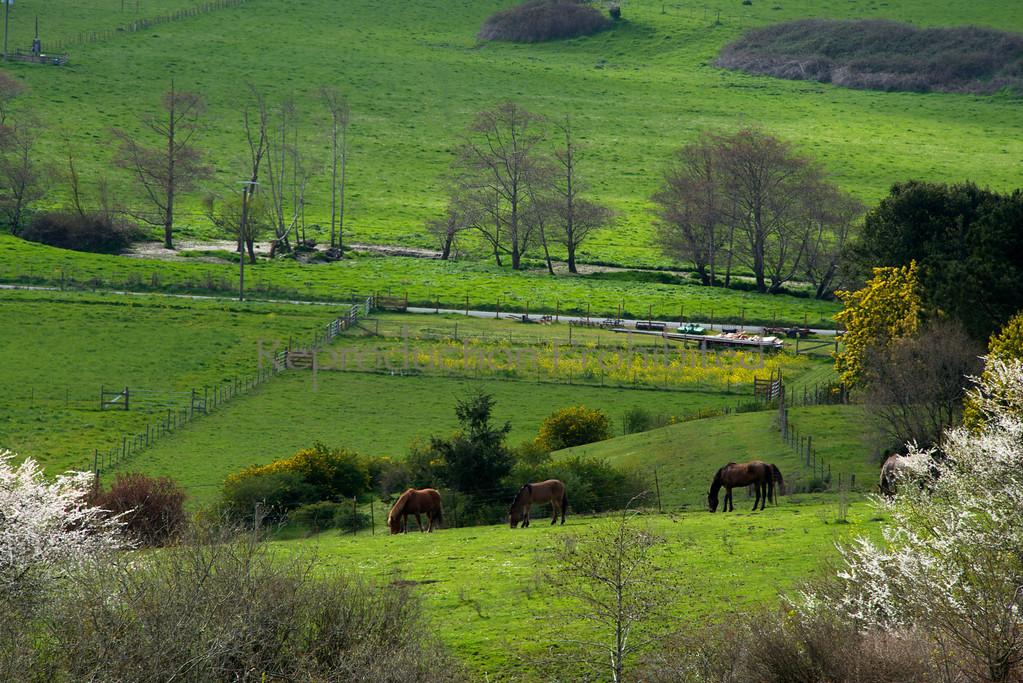 Horse Heaven Northern California Coast March 2013