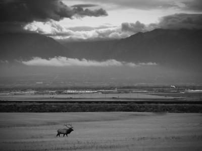 kuc elk