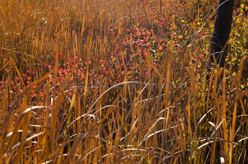 Grass Land<br /> Crooked River National Grassland, OR.<br /> September 2012