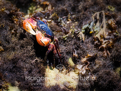Crab, Morro Bay, California