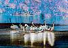 Pelicans of Sanibel Blue & Pink