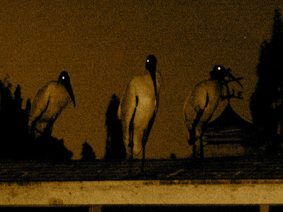 rooftop visitors......