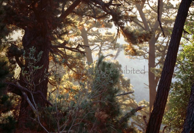 Forest Garden Oakland Hills, CA.
