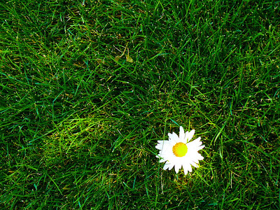 flower in the grass