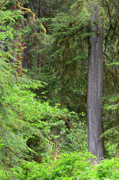 Homewood Redwood National Park, CA