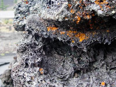 lava lichens