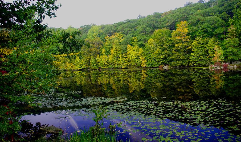 Tuxedo - Pond