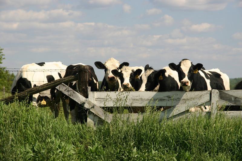 Got Milk ? rlz 2008