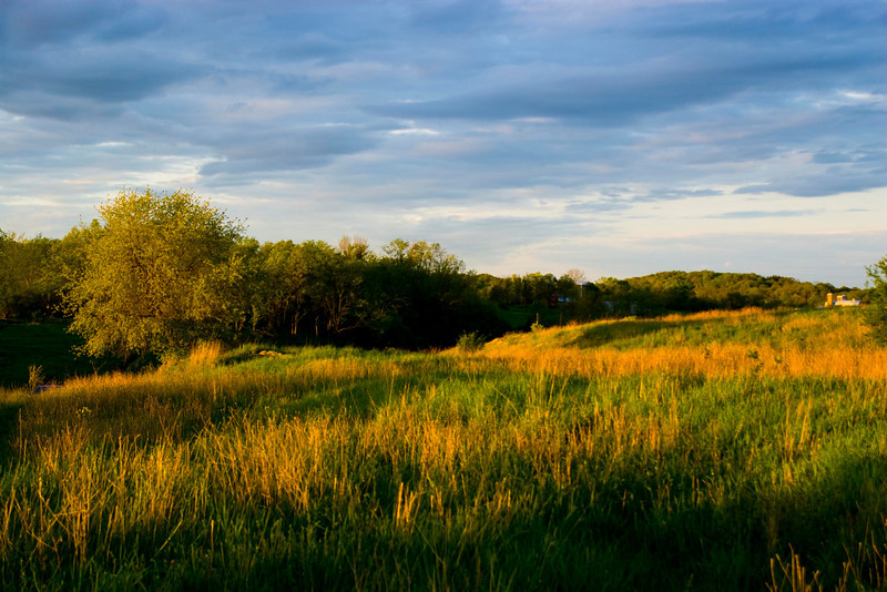 sunset on the meadow -