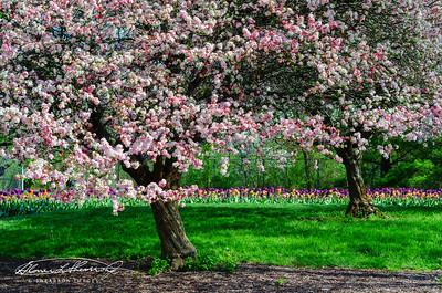 Spring's Promise @ Inniswood