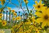 9/05 National Arboretum