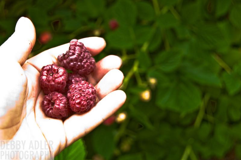 Raspberry Picking 7/6