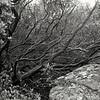 Cleveland National Forest<br /> San Diego, CA<br /> Negative Scan<br /> Feb. 1993<br /> TMY EI 400