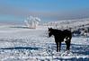 Il Cavallo Nella Neve