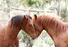 Affetto Di Mustang